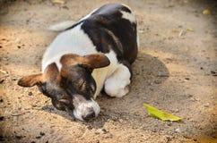 Stray dog laying Royalty Free Stock Photos