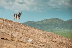 A stray dog leads travelers and hikers on an adventure amid the brown rocks.