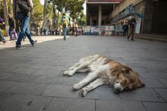 Stray dog lies on the Tbilisi city street stock images