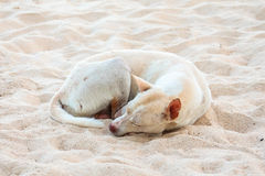 Stray dog lonely on beach Stock Photo