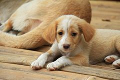 Stray dog. Lonely puppy. A close-up of cute puppy. Lonely puppy royalty free stock image