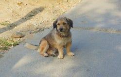 Stray dog Stock Photography