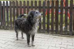 Stray dog looking alert royalty free stock photography