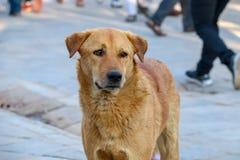Stray dog looking curiously royalty free stock photos