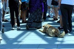 A stray dog lying on the tiled floor among people`s feet. A steet dog lying on the tiled floor among people`s feet stock photo