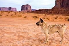 Stray Dog in Monument Valley. Tribal Park, Arizona Stock Photo