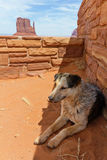 Stray dog in Monument Valley Royalty Free Stock Photo
