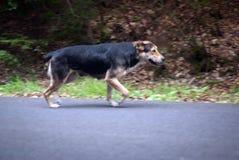 Stray dog Royalty Free Stock Photography