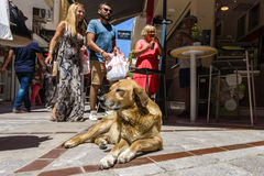Stray dog near a cafe on a shopping street in the historic center of the city. HERAKLION, GREECE - JULY 09, 2016: Crete. Stray dog near a cafe on a shopping stock image