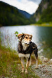 Stray dog near a lake Stock Images