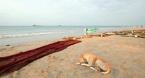 Stray dog next to fishing nets and small fishing boat on Nilaveli beach in Trincomalee Sri Lanka. Asia stock photography