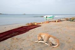 Stray dog next to fishing nets and small fishing boat on Nilaveli beach in Trincomalee Sri Lanka. Asia royalty free stock image