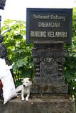 Stray dog next to Indonesian writing. Bali, Indonesia. White stray dog laying next to Indonesian sign Stock Images