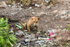 Stray dog. Photo image  with vagabond dog  in the trash Royalty Free Stock Photo