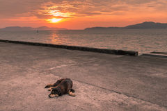 Stray dog. On pier at sunset , homeless dog Stock Images