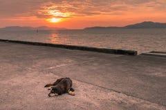 Stray dog. On pier at sunset , homeless dog stock images