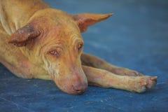 Stray dog in public place. Abandoned dog or stray dog resting in public place stock images