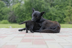 Stray dog and puppy Stock Photography
