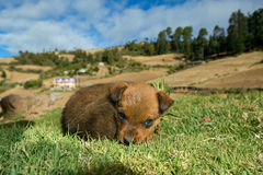 Stray dog puppy curled up in the grass Royalty Free Stock Photo