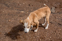 Stray dog puppy. Sad lonesome stray dog is staying in mud Stock Photo