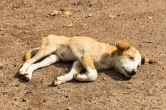 Stray dog puppy. Sad lonesome stray dog is staying in mud Royalty Free Stock Photography