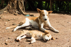 Stray dog puppy. Sad lonesome stray dog is staying in mud Stock Images