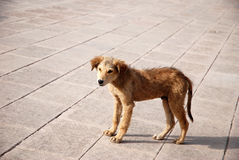 Stray dog Stock Images