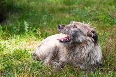 Stray Dog Resting Royalty Free Stock Photos