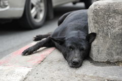 Stray Dog Rests on a City Street. A stray dog lies by a busy roadside on January 27, 2012 in Bangkok, Thailand. The Thai capital has an estimated 120,000 stray Royalty Free Stock Photography