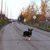 Stray dog. On the road Royalty Free Stock Photos