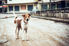 Stray dog. On the road Stock Images