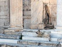 Stray Dog, Roman Agora, Athens, Greece Stock Photos