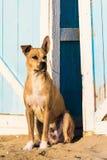 Stray dog on the sand Royalty Free Stock Photo