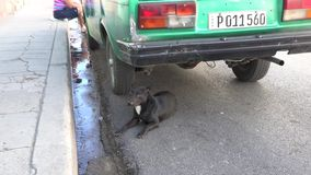 Stray Dog in Santa Clara Streets, Cuba. SANTA CLARA, CUBA-JULY 23, 2014: Street dog under a car. Meanwhile the city battles the mosquito and the cholera, stray stock video footage