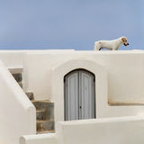 Stray dog in Santorini Stock Photos