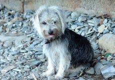 Stray dog sat on stones Stock Image