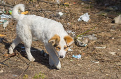 Stray dog on a scrap-heap Royalty Free Stock Photos