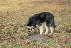 Stray dog in search of food. Stray dog in search of some food Stock Image