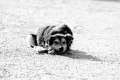 Stray dog on the seashore. Stray dogs on the beaches in Goa and Kerala. Shaggy motley animal. The dog faithfully looks at potential breadwinner and owner stock photo