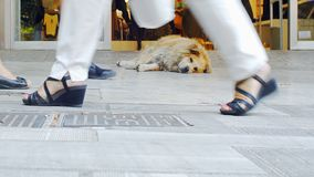Stray Dog On Shopping Street. A Stray Dog Resting On The Sidewalk In Front Of A Shop Entrance In Between Pedestrians Feet On A Busy Shopping Street In Athens stock photos