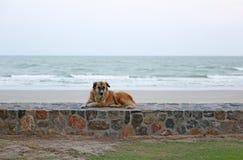 Stray dog sitting on the beach. Cute puppy sitting on the stone near sand beach. Stray dog stock photo