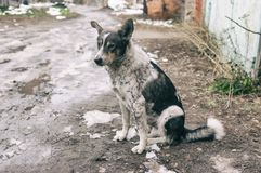 Stray dog sitting on a dirty street at autumnal season. Lonely sad stray dog sitting on a dirty street at autumnal season Stock Images