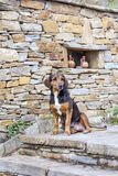 Stray dog sitting  outdoor Royalty Free Stock Photography