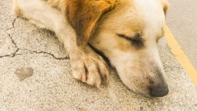 Stray dog sleaping on the pavement Royalty Free Stock Photography