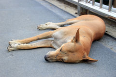 Stray dog sleep on the ground Royalty Free Stock Images