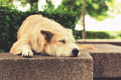 Stray dog sleeping at park. Vintage effect tone. Royalty Free Stock Images