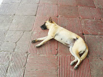 Stray dog is sleeping in the street Royalty Free Stock Photo