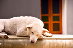 Stray dog. A stray dog sleeping on the wall Royalty Free Stock Images