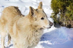 Stray dog on a snow background Stock Photography