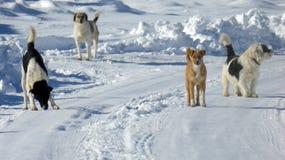 Stray dog on a snow Stock Photos